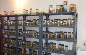 Specimens in Centre for Excellence in Biodiversity